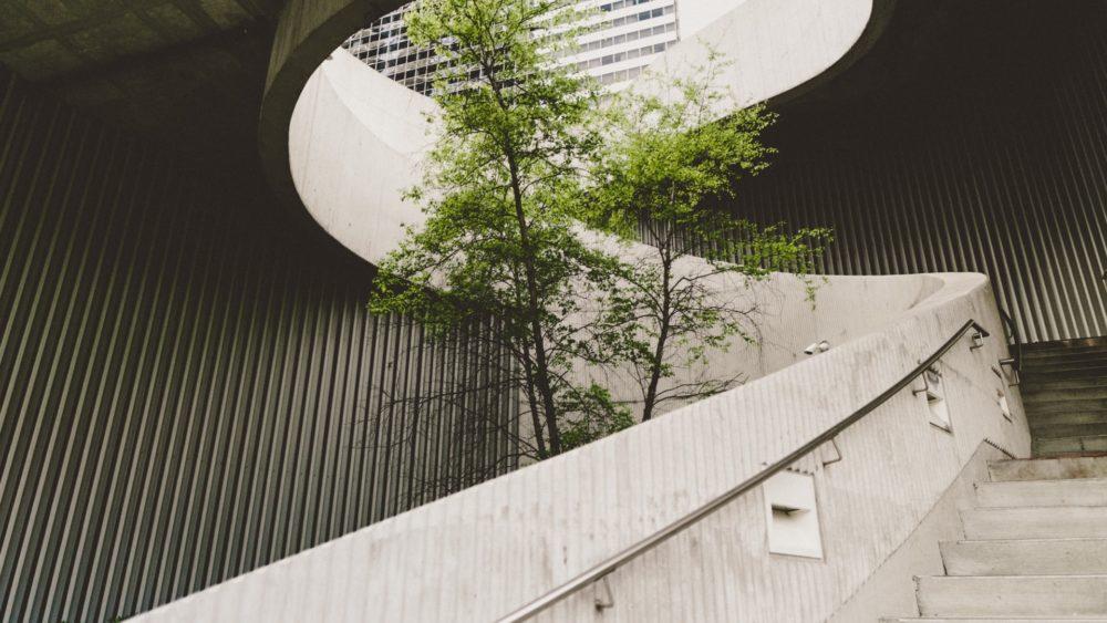 Arbre poussant au milieu d'un escalier d'immeuble